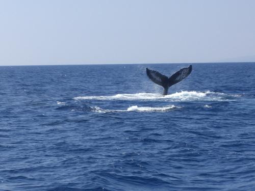 Whale_fin